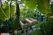 Тепличное хозяйство УГМК будет выращивать овощи круглый год