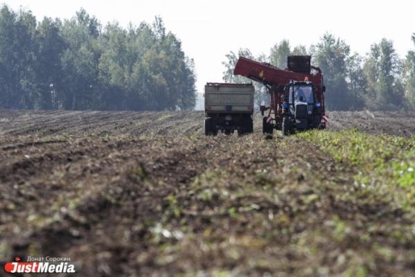 Площадь посевов в Свердловской области в нынешнем году составит 813 тысяч гектаров