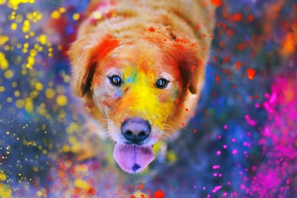 В Екатеринбурге пройдет парад разноцветных животных