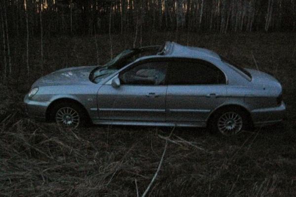 Вблизи Байкалово лось столкнулся с автомобилем. Животное погибло, водитель машины — в больнице