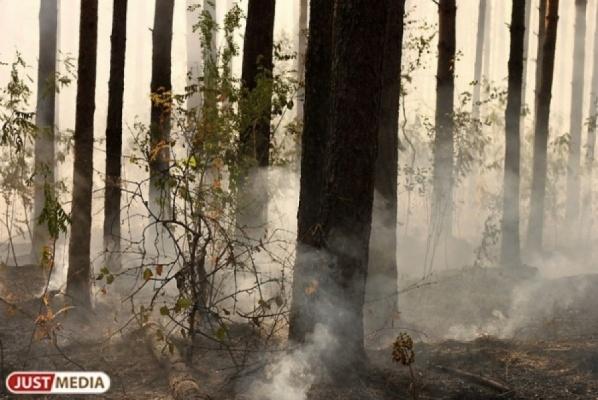 На Среднем Урале действуют два природных пожара — под Невьянском горит лес, в Екатеринбурге — трава