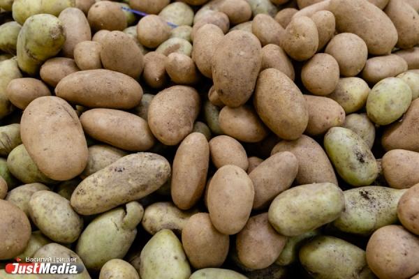 Разработка УрФУ поможет повысить урожайность картофеля
