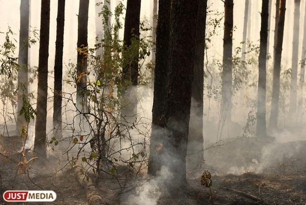 В Свердловской области горит 80 гектаров леса