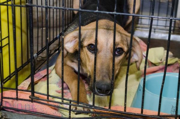 Екатеринбуржцев приглашают на именины бездомной собаки!