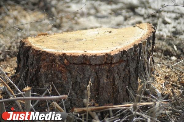 Свердловчанин, срубивший 39 сосен, проведёт вколонии 2,5 года