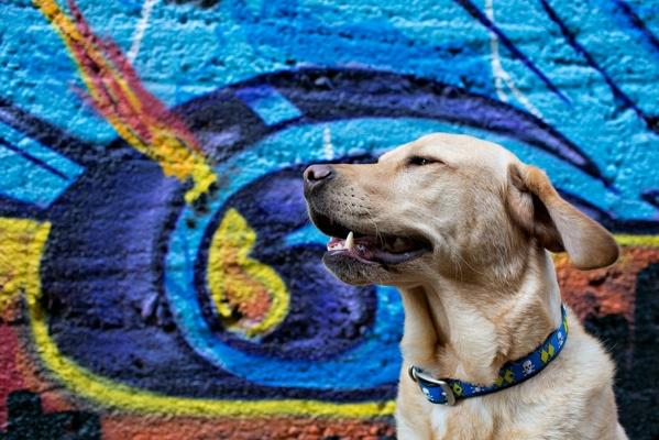 В Всемирный день бездомных животных художницы распишут стены екатеринбурского пункта кратковременного содержания животных