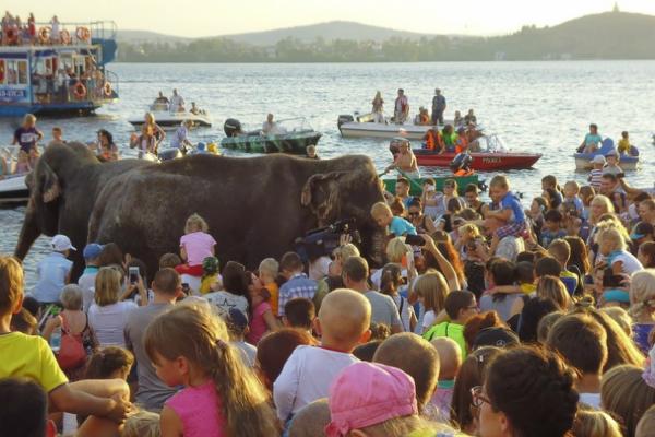 Жители Нижнего Тагила обнаружили в городском пруду трех слонов. ФОТО