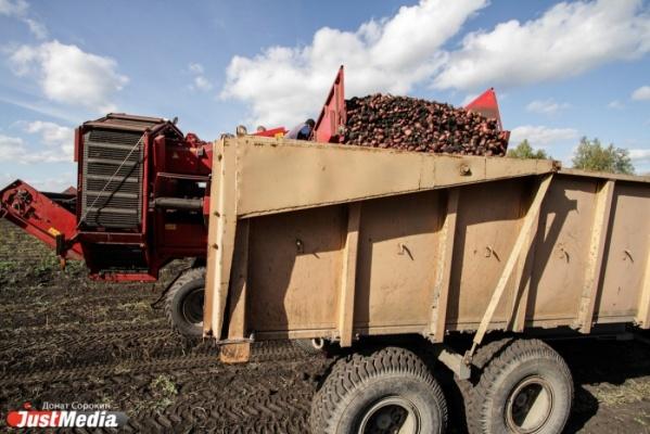 Свердловские аграрии убрали 90% зерна Сегодня в12:34