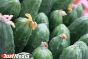 Екатеринбургские садоводы и огородники смогут продать излишки урожая на сезонных ярмарках