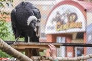 Екатеринбургский зоопарк приглашает гостей на свой день рождения