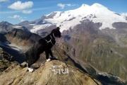Нижнетагильский кот-путешественник покорил Эльбрус