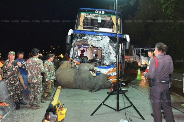 Свидетели случайно сняли навидео, как автобус вТаиланде сбивает слона