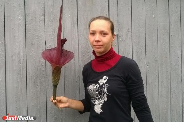 В Екатеринбурге расцвел экзотический цветок, который «благоухает» тухлым мясом. ФОТО