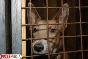 На «Спецавтобазе» начинаются дни открытых дверей: екатеринбуржцы могут выбрать себе собаку