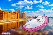 Рисованный кот из Академического покоряет Екатеринбург в компании JustMedia. ЭКСКЛЮЗИВНЫЕ ФОТО