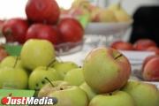 Сотрудники Россельхознадзора изъяли в Екатеринбурге 8,4 тонны яблок неизвестного происхождения
