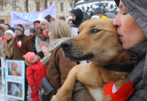 Люди исобаки вышли напикет против подозреваемых вживодерстве вХабаровске