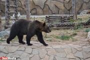 В Екатеринбургском зоопарке медведи возвращаются в берлоги с евроремонтом