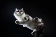 В Екатеринбурге объявили кастинг среди кошек с фотогеничными «ладошками»