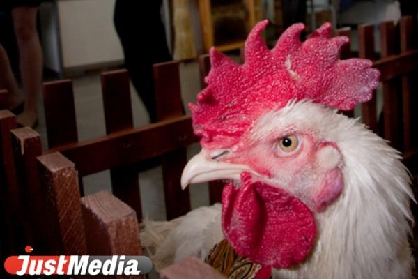 Прокуратура оштрафовала птицефабрику «Свердловскую» за нелегальную свалку