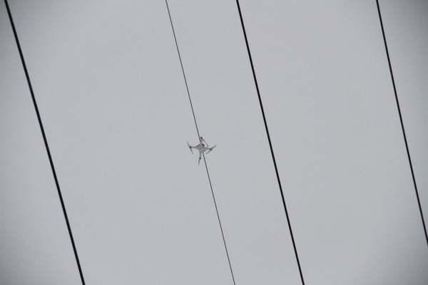 ВЕкатеринбурге готовят специализированную операцию поснятию квадрокоптера спроводов ЛЭП