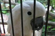 В Нижнем Тагиле бомж украл из зоомагазина две клетки с попугаями