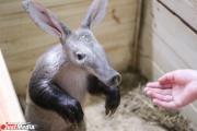 Два дня в неделю юные екатеринбуржцы смогут ходит в зоопарк бесплатно