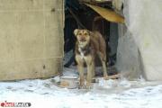 Зоозащитники ищут живодера, который прорубил лопатой голову собаке