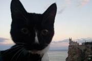 Покоривший Эльбрус кот Граф из Нижнего Тагила попал в ТОП-10 самых популярных котиков мира