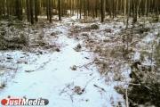 Житель Екатеринбурга на охоте вместо косули случайно убил знакомого