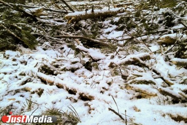 Глава Верхней Пышмы «сократил» площадь леса округа на 600 гектаров