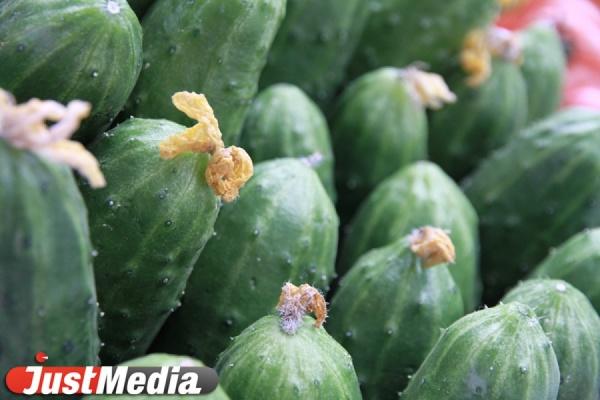 Россельхознадзор не будет снимать ограничения на поставку овощей из Турции до конца 2016 года