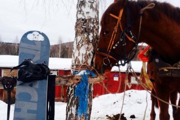 Екатеринбуржец изобрел новую зимнюю забаву, «скрестив» сноуборд и лошадь. ВИДЕО
