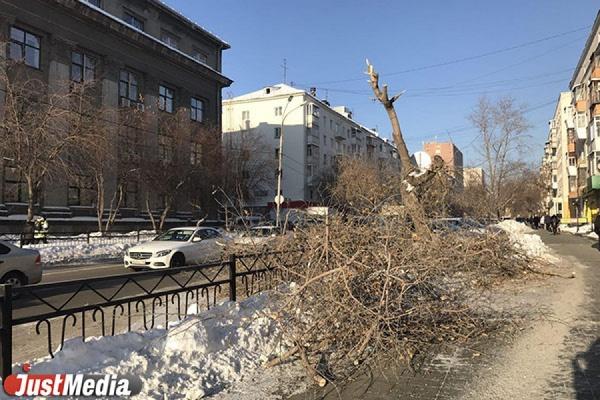 В центре Екатеринбурга уже три дня никто не убирает рухнувшее на дорогу дерево