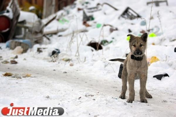 В Свердловской области на детской площадке собаки загрызли семилетнюю девочку