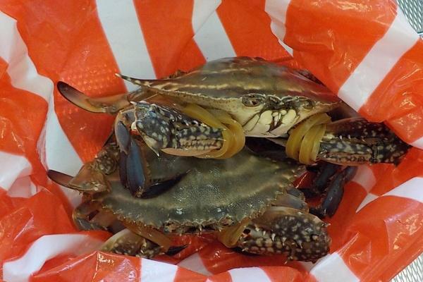 В Кольцово в багаже китайца нашли живых крабов. Животные практически впали в кому