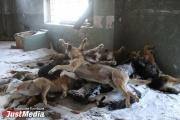 На трассе под Екатеринбургом найдены десятки тел мертвых собак. Зоозащитники обратились в прокуратуру