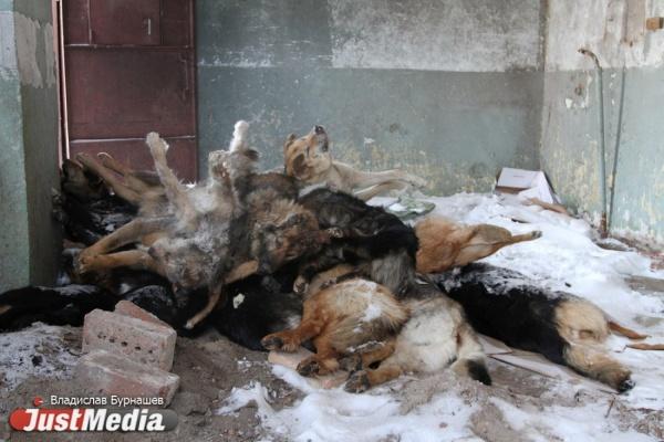 Неменее 20 тел бродячих собак были найдены натрассе близ Екатеринбурга