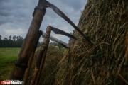 Эдуард Россель предложил бесплатно отдавать бесхозные земли под бизнес-проекты