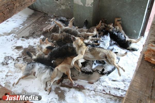Трупы кошек и собак в передержке на Уктусской обернулись уголовным делом