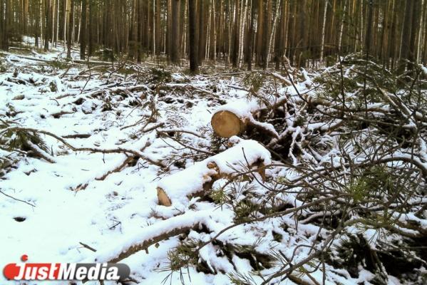 Уральские казаки нашли себе применение. Они будут помогать свердловским властям охранять леса от лесорубов и пожаров