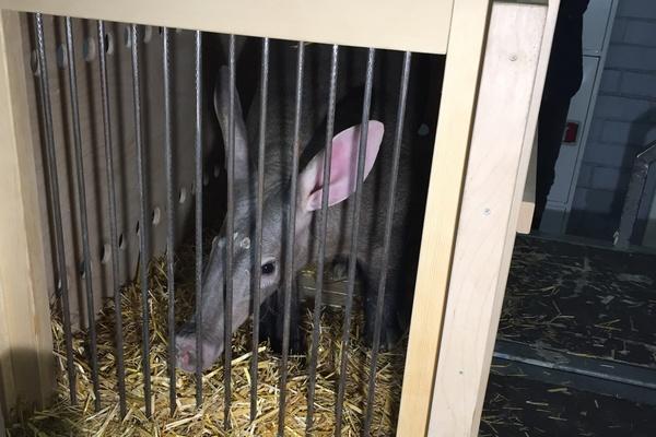Малыш-трубкозубик из Екатеринбургского зоопарка улетел в Чехию