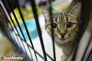 В «Ночь музеев» екатеринбургские площадки будут раздавать горожанам бездомных кошек и обучать хитростям выживания в лесу