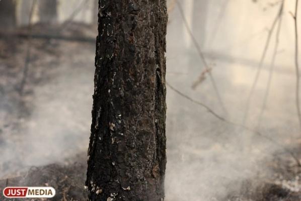 Пожар из-за поджога сухой травы произошел впоселке под Екатеринбургом