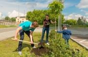 Первые новоселы ЖК «Чемпион Парк» высадили во дворе «именные» деревья. ФОТО