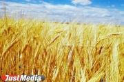«Урожай будет хорошим». Уральские аграрии готовят технику к работе под дождями