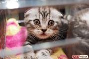 Жительница Екатеринбурга отсудила 14 тысяч рублей за котенка