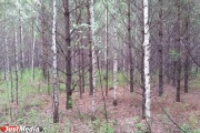 Двух заблудившихся в лесу подростков под Невьянском нашли живыми