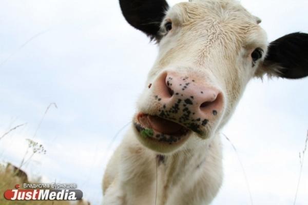 Росстат: Свердловская область за 10 лет укрепилась в аграрном секторе