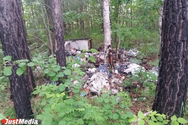 В Свердловской области самая плохая экологическая обстановка по России – данные «Зеленого патруля»